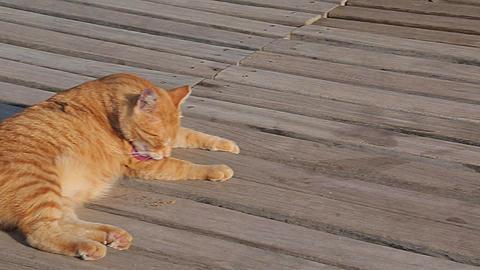 Cat on Boardwalk, Marmaris, Anatolia, Turkey