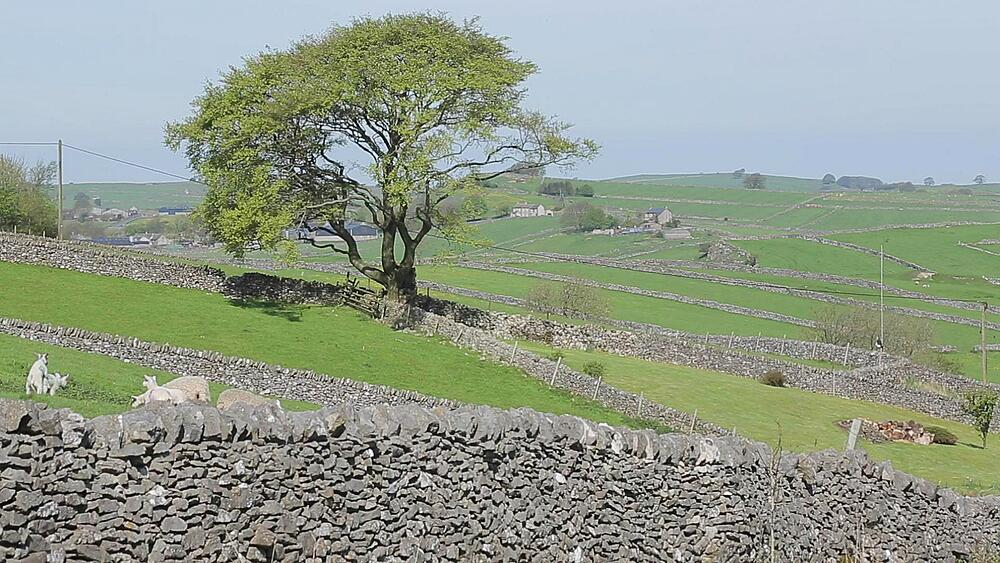 Lanscape & Lambs near Wardlow, Derbyshire, England, UK, Europe