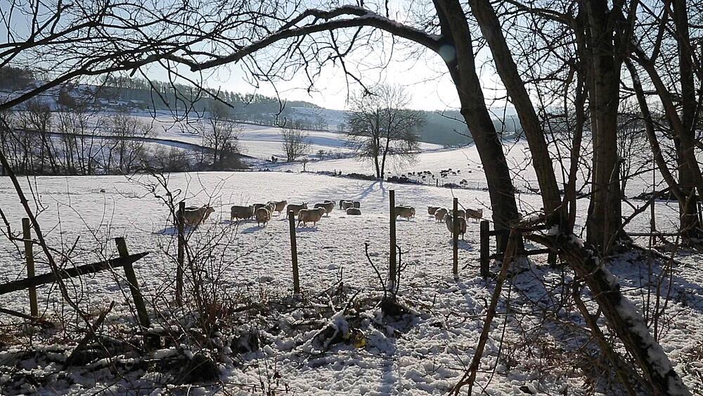 Snow Scene near Hassop, Peak District National Park, Derbyshire, England, UK