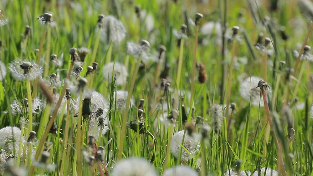 View of Summer Flowers, Derbyshire Dales, Derbyshire, England UK, Europe