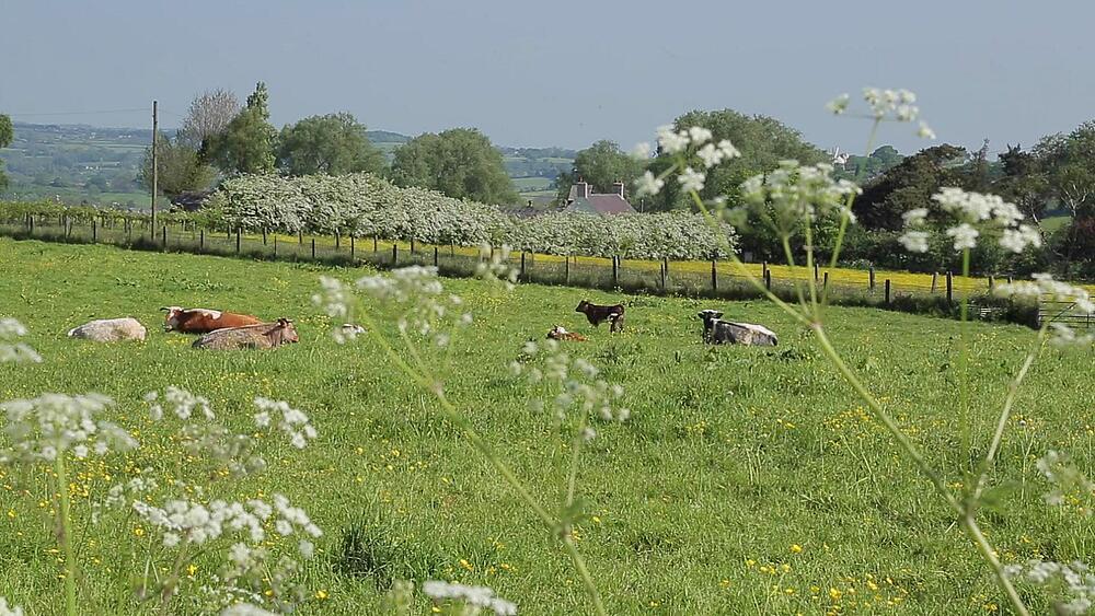 Countryside, Heage, Derbyshire Dales, Derbyshire, England, UK, Europe