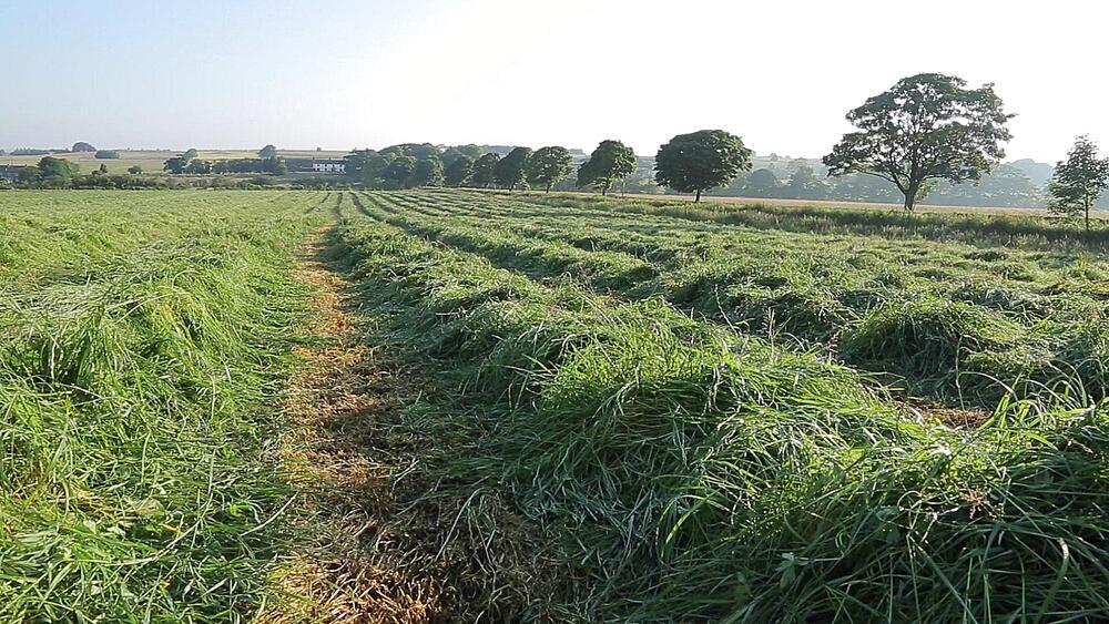 Hay Field, Near Wadshelf, Peak District National Park, Derbyshire, England, UK, Europe
