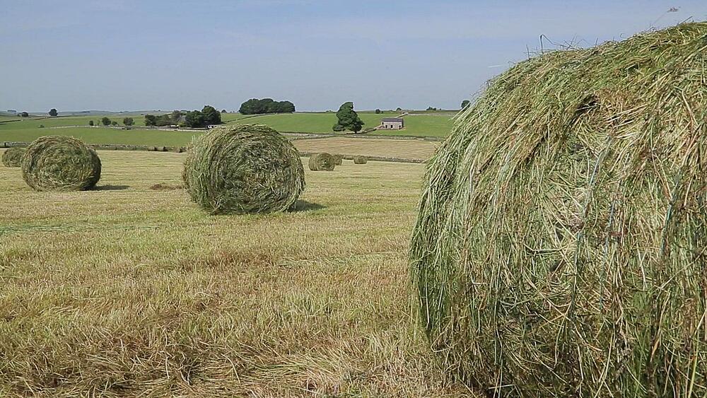 Hay Field near Tissington, Peak District National Park, Derbyshire, England, UK, Europe