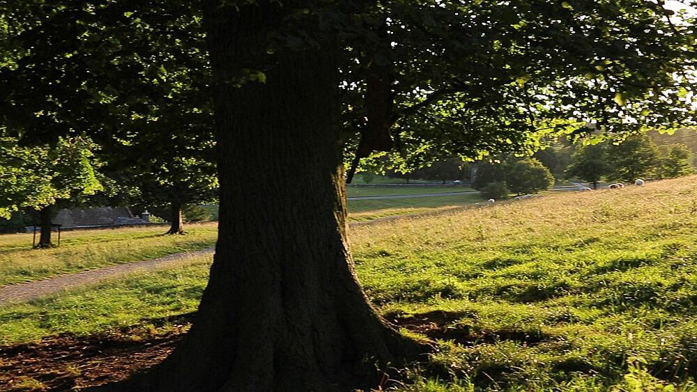 Sunset in Chatsworth Park, Derbyshire, England, UK, Europe