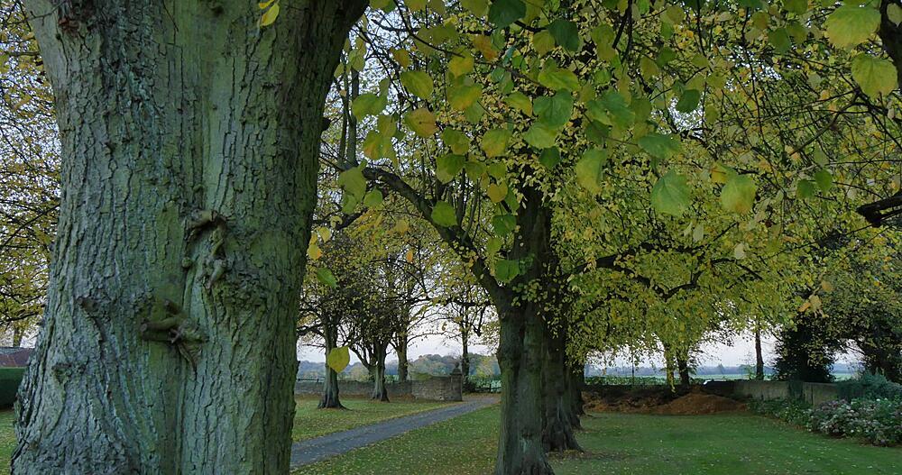 Autumn Leaves at Teversal, Nottinghamshire, England, United Kingdom, Europe