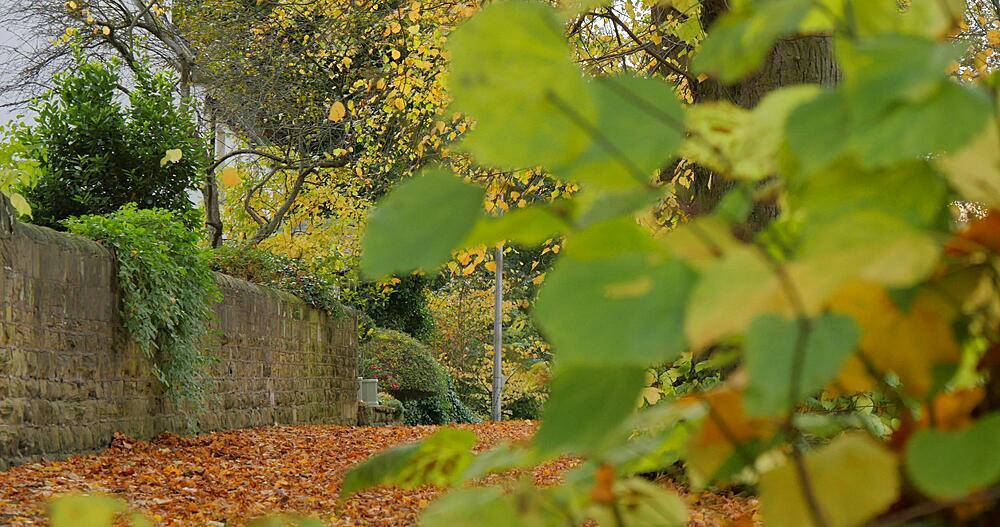 Autumn Leaves & Cottage at Teversal, Nottinghamshire, England, United Kingdom, Europe