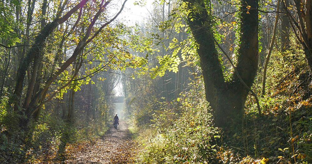 Autumn Leaves & Teversal Trail, Nottinghamshire, England, United Kingdom, Europe