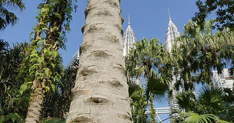 Petronas Towers, Kuala Lumpur City Centre Park, Kuala Lumpur, Malaysia, South East Asia, Asia