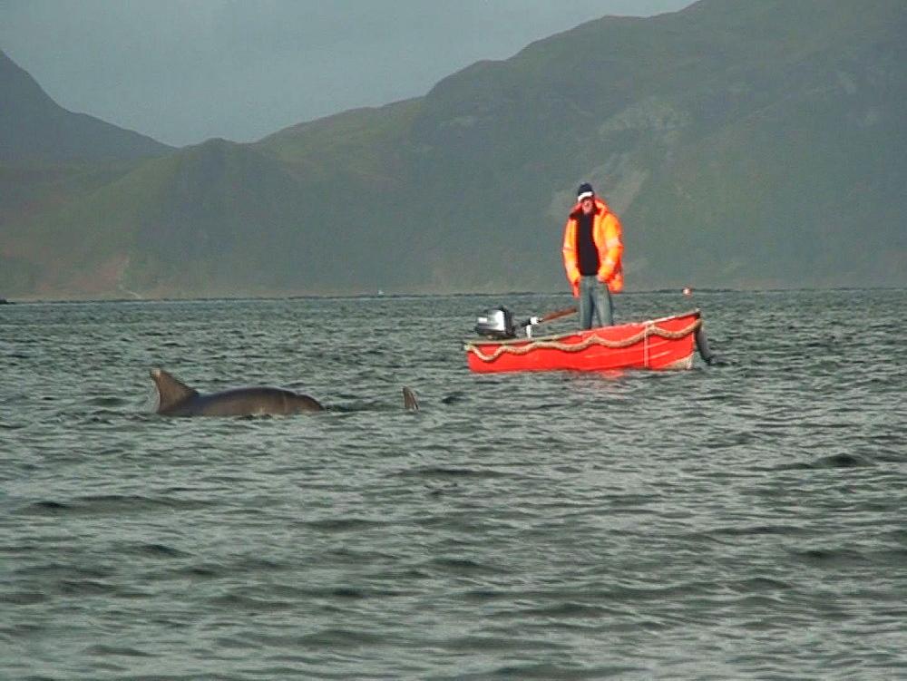 Bottlenosed dolphins (Tursiops truncatus). breach. Tobermory. Mull. UK. 15/07/09 - 888-16
