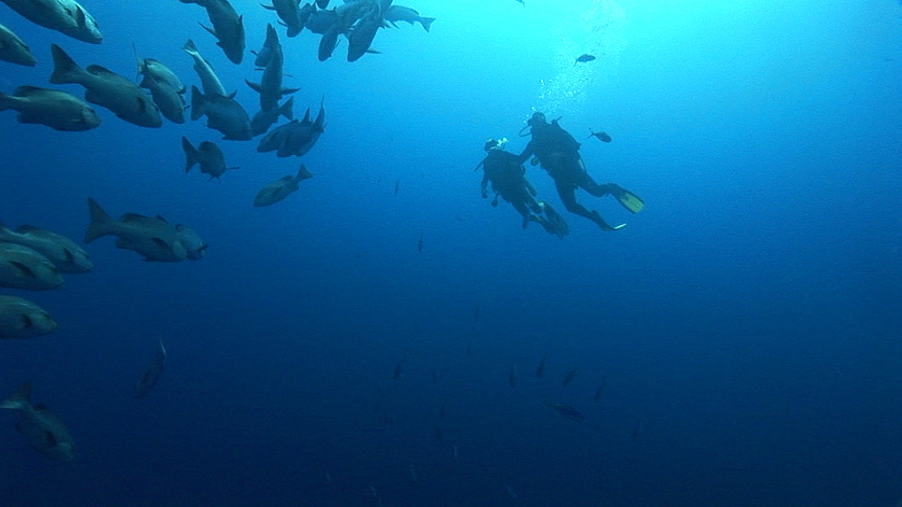 Divers past shoal of fish. Red Sea - 945-308
