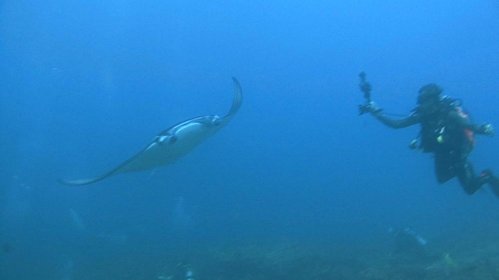 Manta (Manta biristris) swims to diver for photo, Indian ocean, Maldives - 958-1030