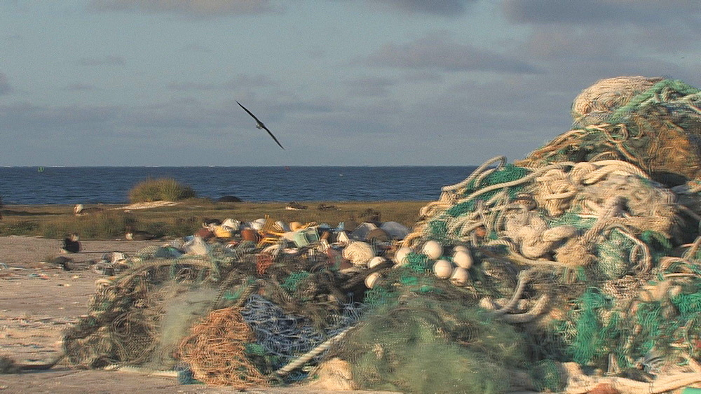 Mounds of washed up rubbish and discarded nets near beach and Laysan albatross (Phoebastria immutabilis) colony. Conservation story - rubbish. Midway Island. Pacific