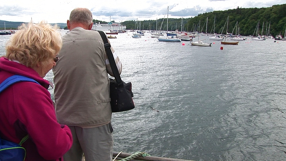 Tourists watch eurasian otter (Lutra lutra). Tobermory. Mull. Scotland - 988-433