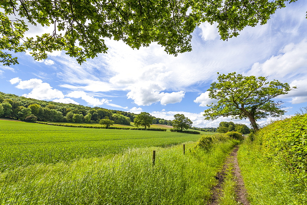 A beautiful day along the Chiltern Walk, The Chilterns, Buckinghamshire, England, United Kingdom, Europe - 10-390