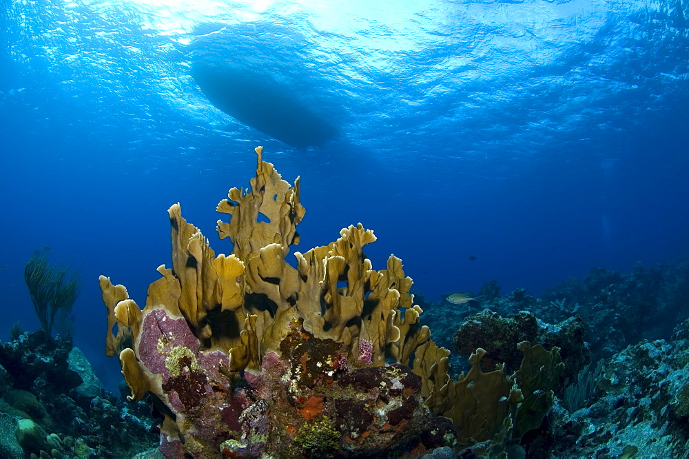 Underwater view and the underside of a boat. Compasspoint, Caymans. - 1022-55