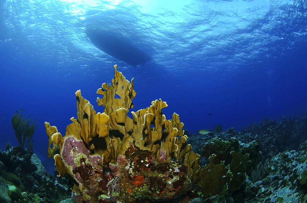 Underwater view and the underside of a boat. Compasspoint, Caymans. - 1022-56