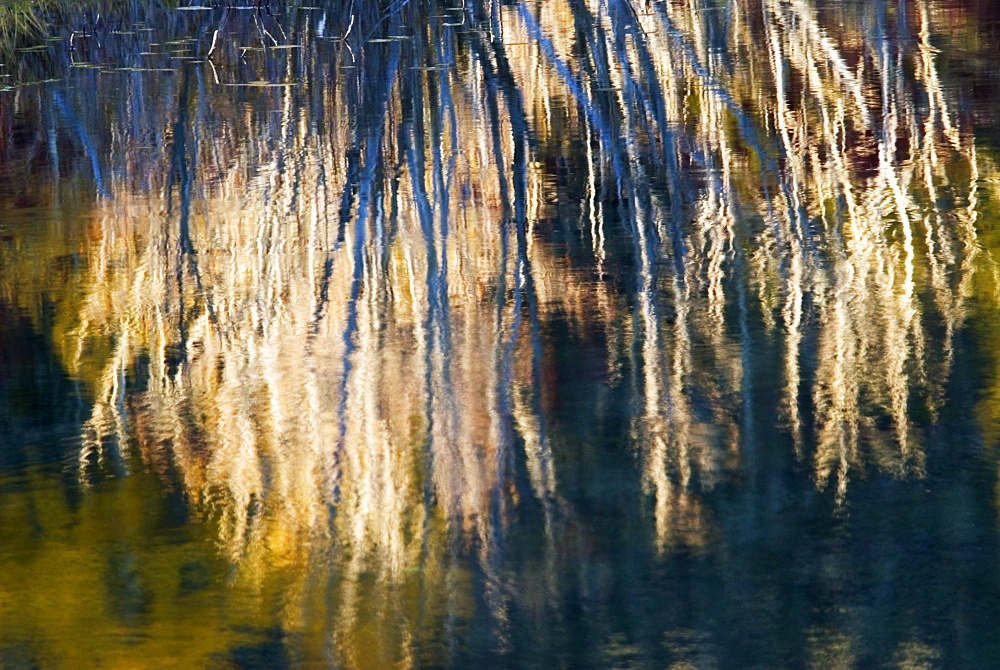 Autumnal reflections of trees in pond, Wyoming, USA - 1024-12