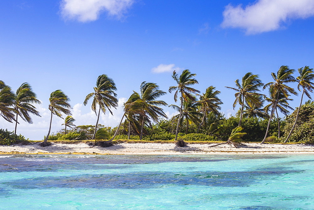 Petit Tabac, Tobago Cays, The Grenadines, St. Vincent and The Grenadines, West Indies, Caribbean, Central America