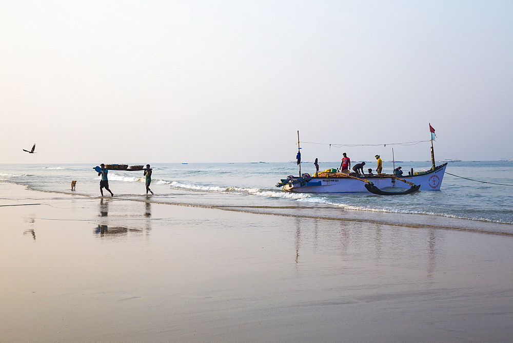 Fishermen carrying baskets of fish, Colva Beach, Goa, India, Asia - 1104-1175