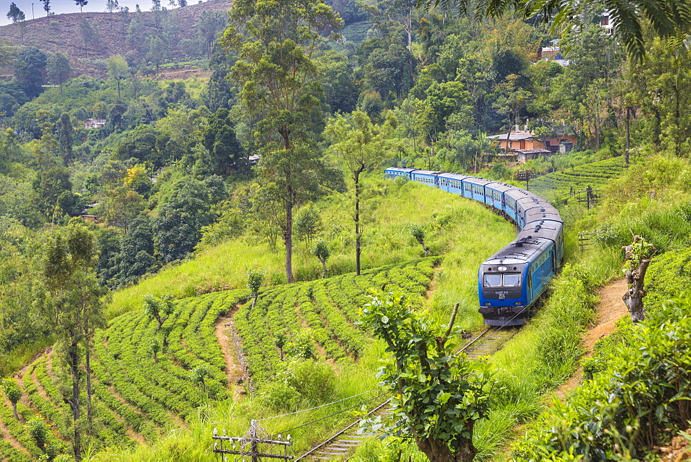 Kandy to Badulla train alongside tea estate near Nuwara Eliya, Nuwara Eliya, Central Province, Sri Lanka, Asia