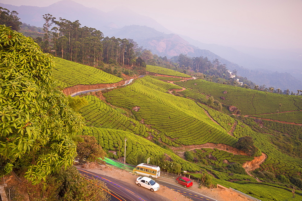 Road winding through Munnar tea estates, Munnar, Kerala, India, Asia
