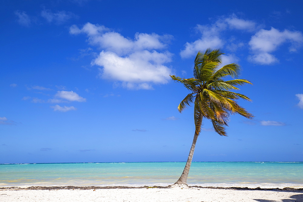 Cap Cana Beach, Punta Cana, Dominican Republic, West Indies, Caribbean, Central America