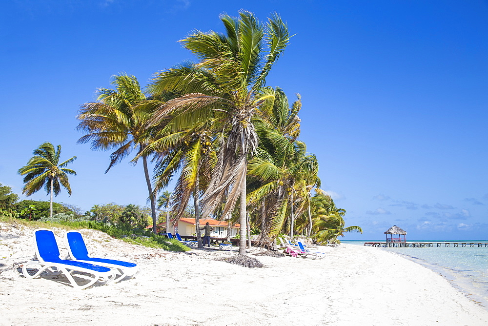 Palm trees and beach, Playa El Paso, Cayo Guillermo, Jardines del Rey, Ciego de Avila Province, Cuba, West Indies, Caribbean, Central America