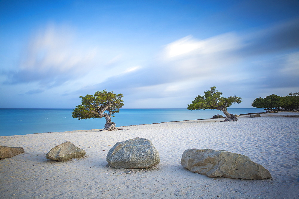 Divi Divi Trees on Eagle Beach, Aruba, Lesser Antilles, Netherlands Antilles, Caribbean, Central America