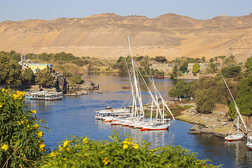 Egypt, Upper Egypt, Aswan, Feluccas on River Nile and Aswan - 1104-799