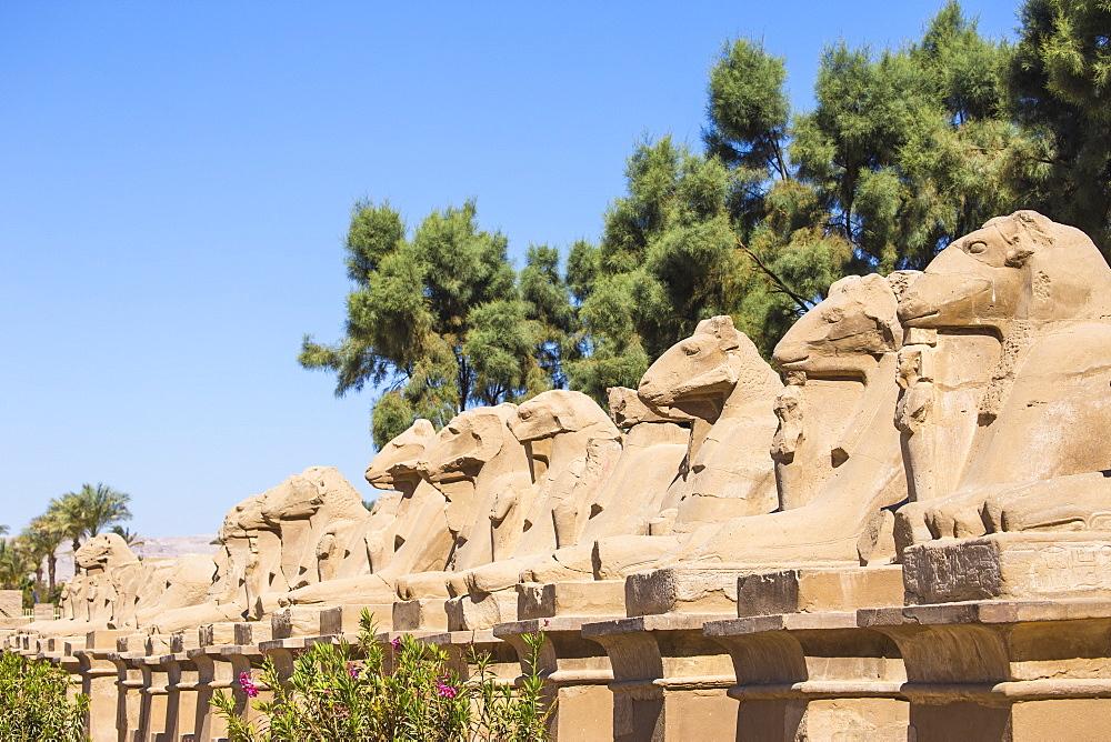Egypt, Luxor, Luxor Temple, Avenue of Spinxes - 1104-827