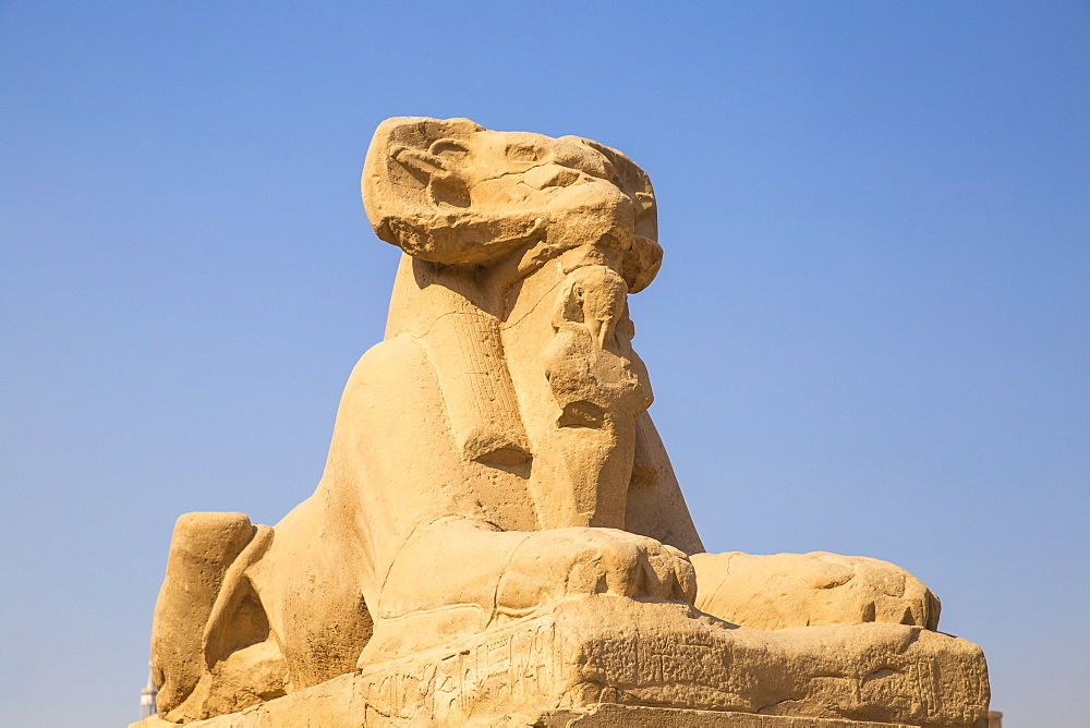 Egypt, Luxor, Luxor Temple, Avenue of Spinxes - 1104-834