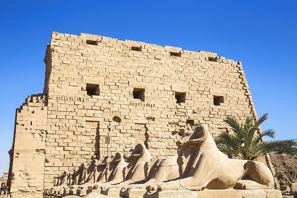Egypt, Luxor, Luxor Temple, Avenue of Spinxes - 1104-838