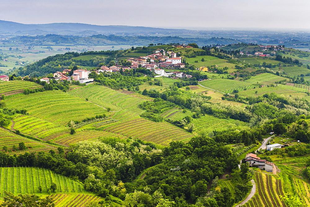 Vineyard countryside surrounding Kozana, Goriska Brda (Gorizia Hills), Slovenia, Europe