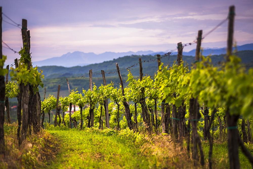 Vineyards and mountains near Smartno in the Goriska Brda wine region of Slovenia, Europe