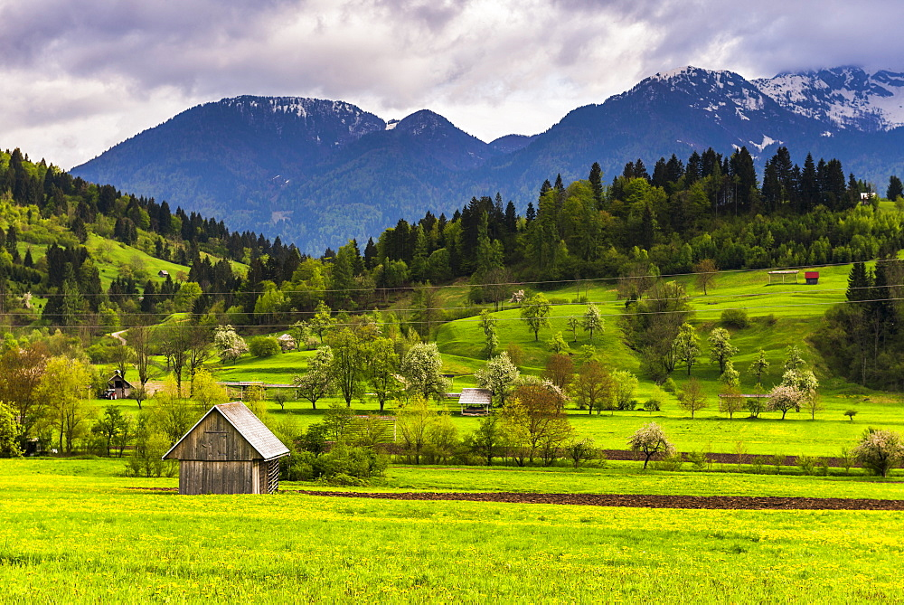 Typical Slovenian landscape between Lake Bled and Lake Bohinj, Triglav National Park, Julian Alps, Slovenia, Europe