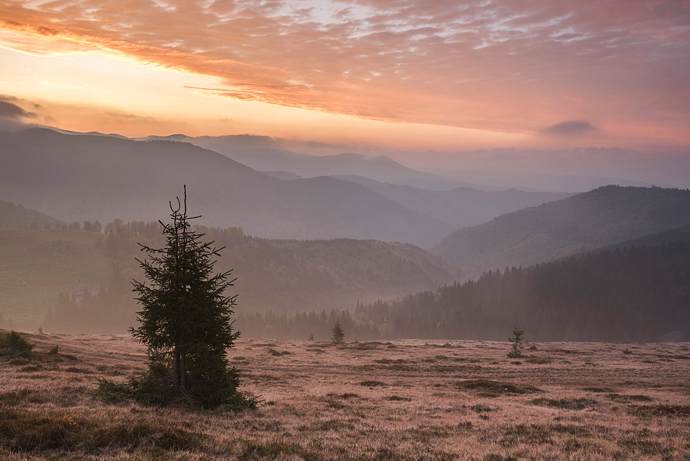 Misty forest and Carpathian Mountains landscape at sunrise, Ranca, Parang Mountains, Oltenia Region, Romania, Europe