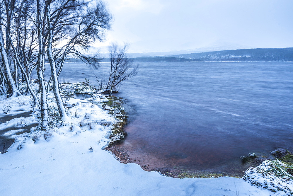 Loch Morlich in snow in winter, Glenmore, Cairngorms National Park, Scotland, United Kingdom, Europe