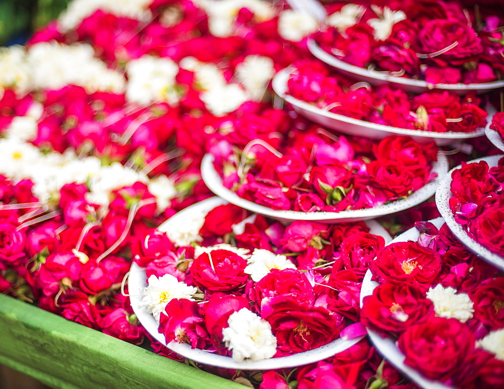 Flowers for offering at a Hindu temple, New Delhi, India, Asia - 1109-3184