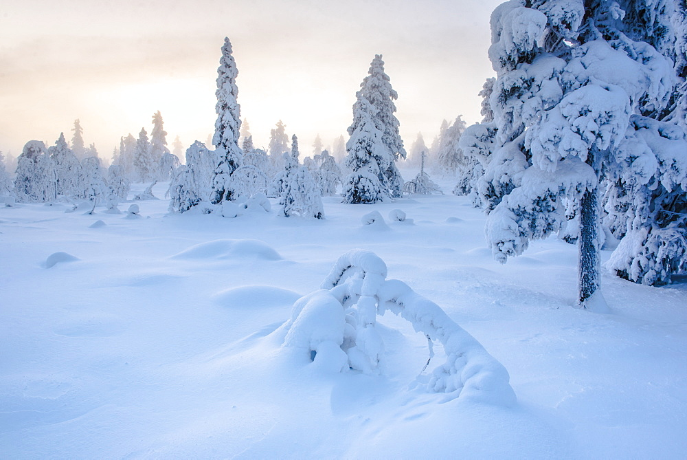 Snow covered winter landscape at sunset, Lapland, Pallas-Yllastunturi National Park, Finland, Europe