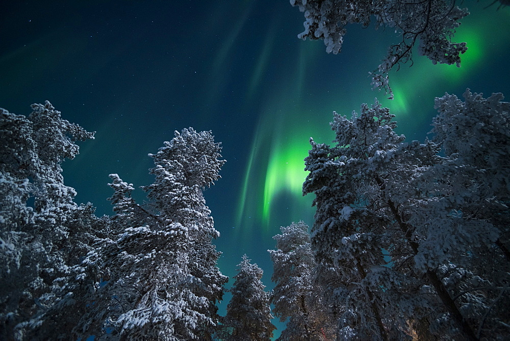 Aurora Borealis (Northern Lights), Pallas-Yllastunturi National Park, Lapland, Finland, Europe