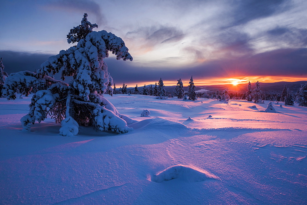 Snow covered winter landscape at sunset, Lapland, Pallas-Yllastunturi National Park, Lapland, Finland, Europe