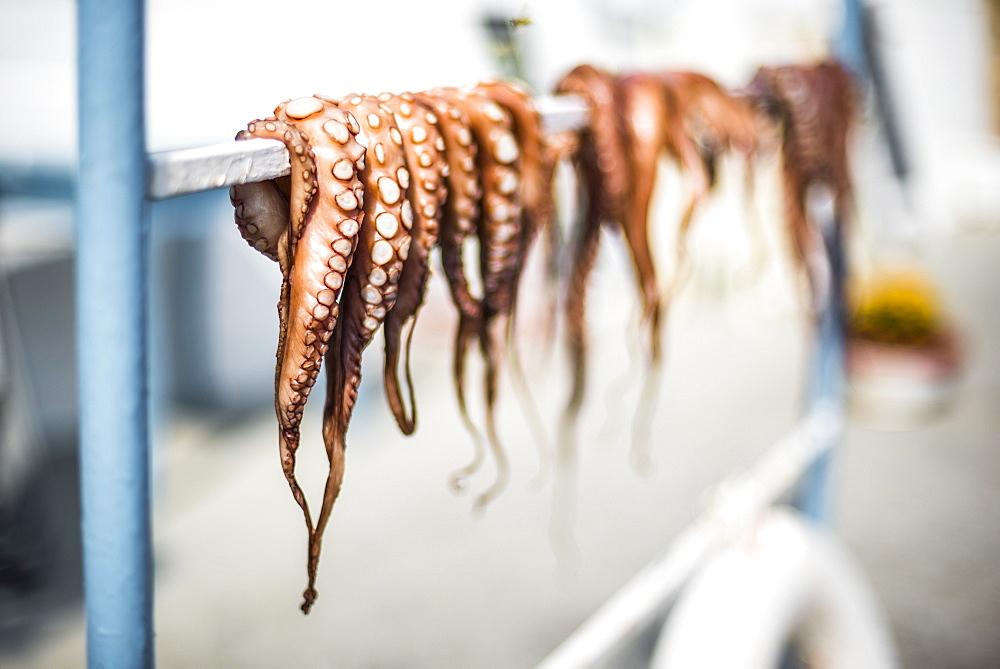 Dried octopus, Ermioni, Peloponnese, Greece, Europe