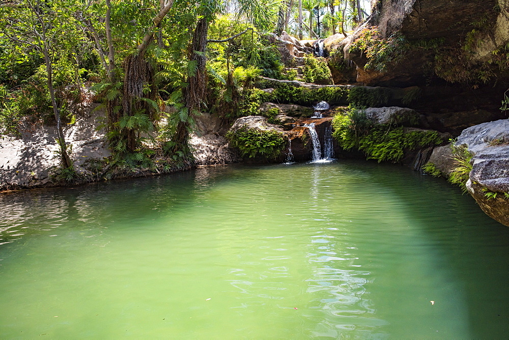 Oasis in Isalo National Park, Ihorombe Region, Southwest Madagascar, Africa - 1109-3561