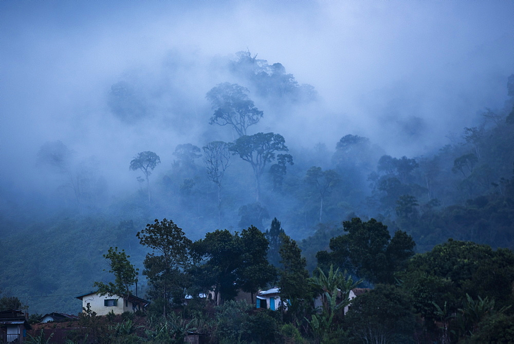 Misty morning in Ranomafana, Haute Matsiatra Region, Madagascar, Africa - 1109-3576
