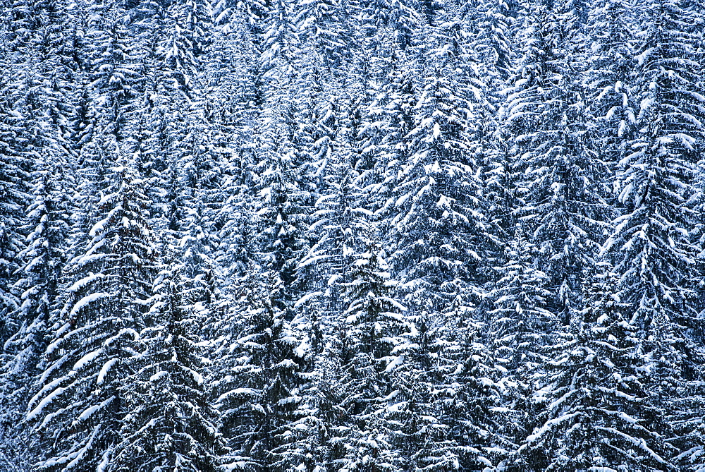 Snowy forest winter landscape, Avoriaz, Port du Soleil, Auvergne Rhone Alpes, French Alps, France, Europe - 1109-3580