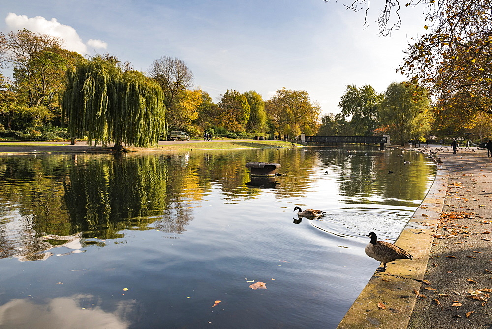Autumn in Regents Park, one of the Royal Parks of London, England - 1109-3723