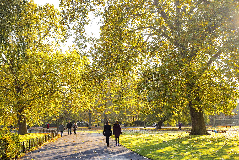 Autumn in Regents Park, one of the Royal Parks of London, England - 1109-3724