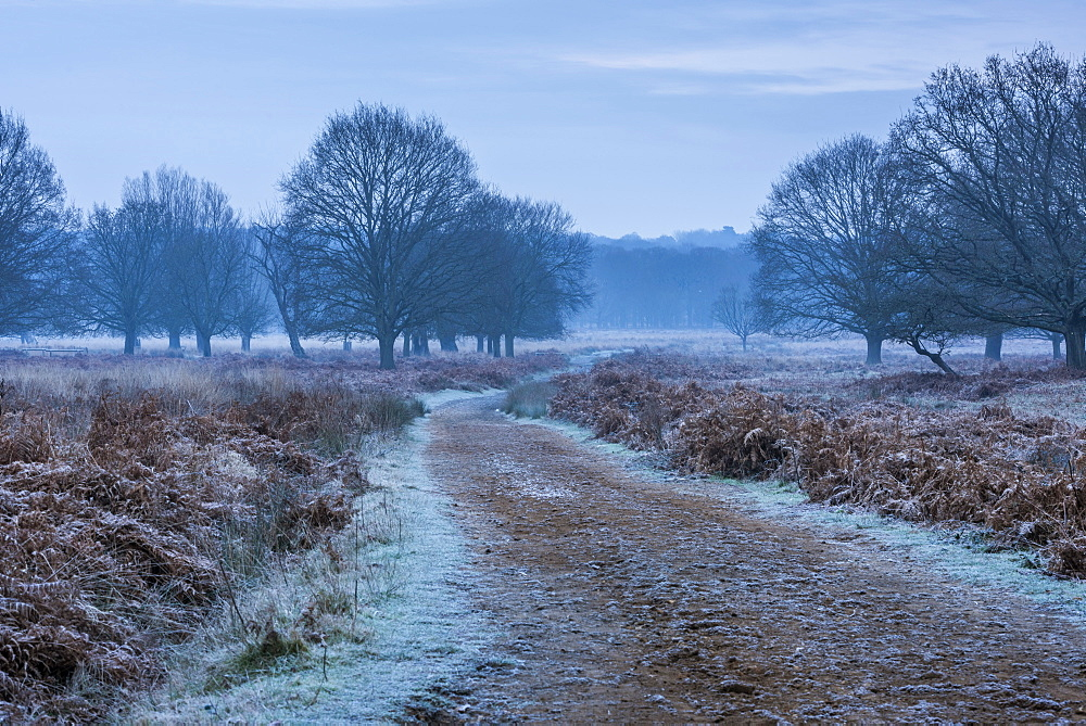 Richmond Park on a frosty morning, London, England - 1109-3730