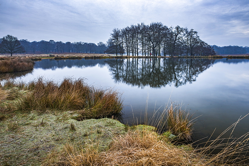 Pen Ponds, the lakes in Richmond Park, London, England - 1109-3733