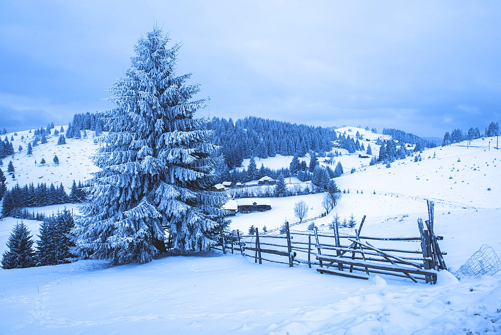 Winter landscape near Bran in the Carpathian Mountains, Transylvania, Romania